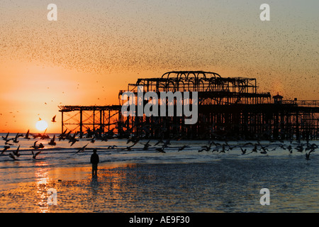 Night flight of starlings over West Pier Brighton Sussex at sunset - Stock Photo
