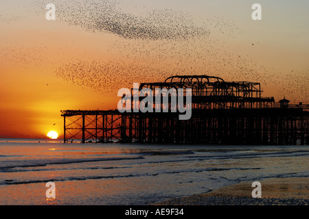 Murmuration, night flight, of starlings over West Pier Brighton Sussex at sunset - Stock Photo