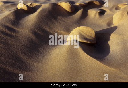 Sand patterns in a seaside dune - Stock Photo