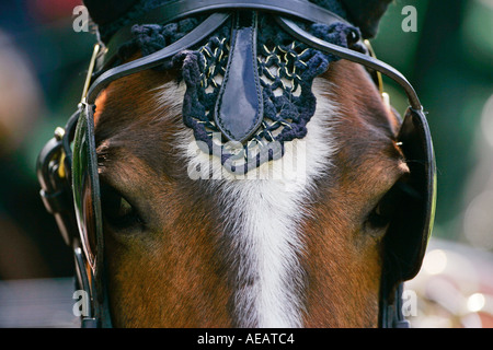 Horse in ceremonial tack harnessed to driving carriage Windsor England - Stock Photo