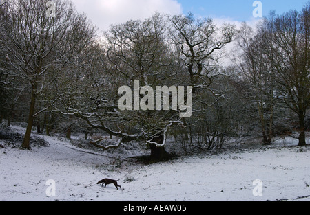 Dog walking in front of snow covered trees on Hampstead Heath London - Stock Photo