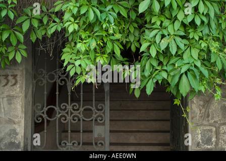 Vines growing on a doorway in Santiago, Chile. - Stock Photo