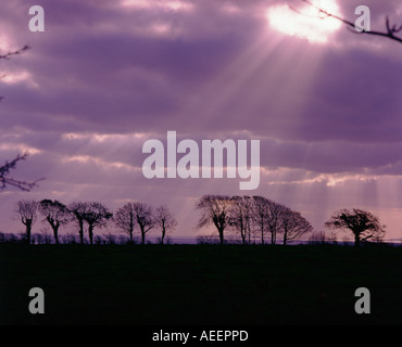 a line of silouetted trees with the sun breaking through a purple sky overhead - Stock Photo