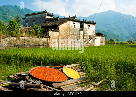 Red Chili Drying Rice Field Old House Likeng Ancient Huizhou Style Village Wuyuan County China - Stock Photo