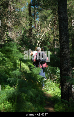 Hikers in woodland near Tejeda in Gran Canaria island one of Spain's Canary Islands - Stock Photo