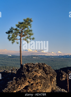 Pine growing in AA lava with Cascade peaks Newberry National Volcanic Monument Oregon - Stock Photo