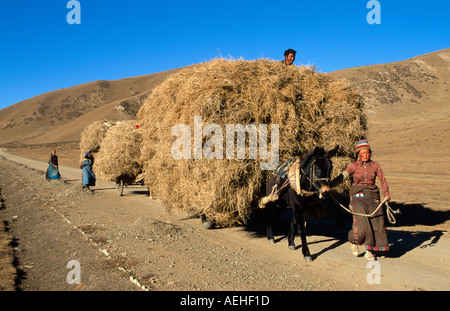 Tibetan Nomads transporting fodder by horse cart on the Sangke Grasslands near Xiahe, Gansu, China - Stock Photo