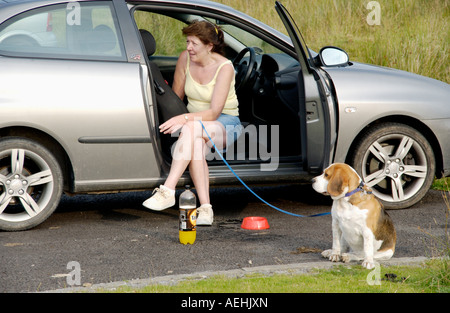 Woman sat in car smoking with Beagle hound dog on lead Keepers Pond Blorenge Wales UK - Stock Photo