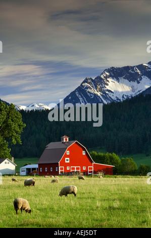 Sheep in pasture with barn and Wallowa Mountains Near Joseph Oregon - Stock Photo