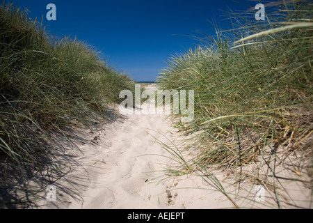 Marram grass on Sylt island, Schleswig-Holstein, Germany - Stock Photo