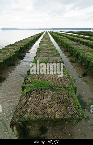 Oyster beds in the bay of Morlaix, Brittany, France - Stock Photo