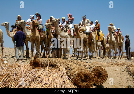 A group of tourists on camels on their way to Ras Abu Galum also Ras Abu Galoum or Ras Abu Gallume north of Dahab - Stock Photo