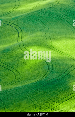 Dappled sunlight on wheat field with tractor tracks The Palouse Washington - Stock Photo