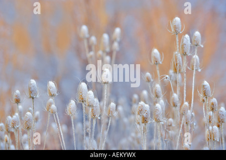Snow on teasles Elkhorn Drive National Scenic Byway Oregon - Stock Photo