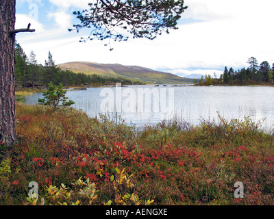 Lake on Valdresflya during the  turning of the seasons/Indian summer,  Jotunheimen, Norway - Stock Photo