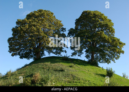 Twin oak trees planted on a mound outside Oxford Castle in the united kingdom - Stock Photo