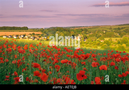 Poppies in fields with Barford st Martin in the distance, Salisbury, Wiltshire, England, UK - Stock Photo