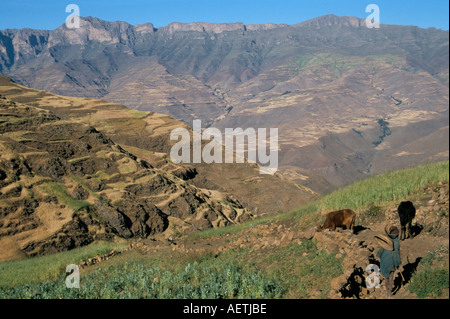 Terraced fields near Ambikwa village Simien Mountains National Park UNESCO World Heritage Site Ethiopia Africa - Stock Photo