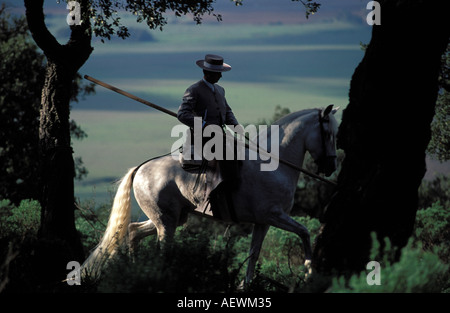 Andalusian cowboy on a Purebred Spanish Horse - Stock Photo