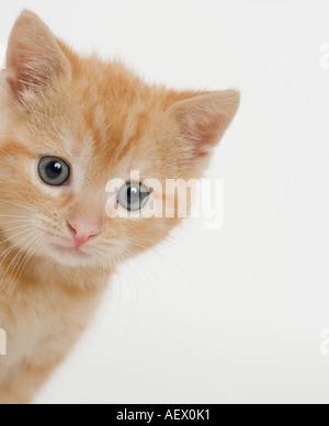 Portrait of a kitten - Stock Photo