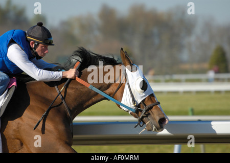 Thoroughbred Horse and Exercise Jockey - Stock Photo