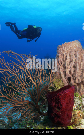 Strawberry Vase Sponge On Wall With Diver And Surface Of Water In