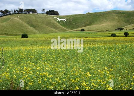 The Cherhill White Horse from meadows, Cherhill, Wiltshire, England, United Kingdom - Stock Photo