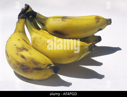 Banana fruit Musa sapientum paradisiacal bunch - Stock Photo