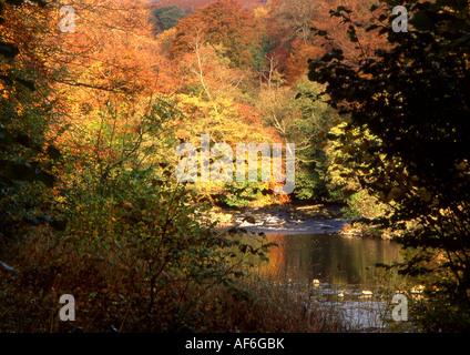 Autumn Sunshie, Strid Woods, Bolton Abbey, North Yorkshire, England, UK. - Stock Photo
