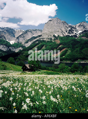 geography / travel, Austria, Styria, landscape / landscapes, Totes Gebirge, landscape at Grundlsee, Salzkammergut, - Stock Photo