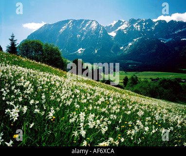 geography / travel, Austria, Styria, landscape / landscapes, Grimming, with flower meadow in foreground, spring, - Stock Photo