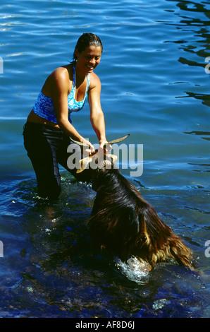 Bano de cabras, goat baptism, Puerto e la Cruz, Tenerife, Canary Islands - Stock Photo