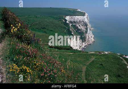 The White Cliffs of Dover dropping to the English Channel, with wild flowers in  foreground, Dover, Kent, England - Stock Photo