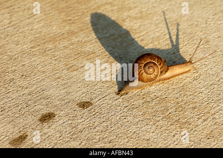 Creeping Snail - Stock Photo