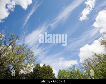 Tree tops against a blue sky with clouds - Stock Photo