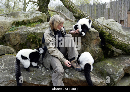The zoo veterinary surgeon of the zoo Allwetterzoo Dr Sandra Silinski with the Ruffedlemurs - Stock Photo