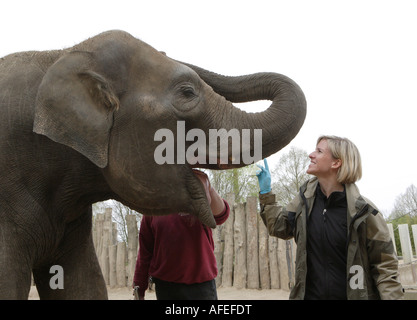 The zoo veterinary surgeon of the zoo Allwetterzoo Dr Sandra Silinski with the female elephant - Stock Photo