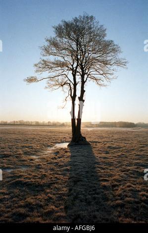 082 kahler Baum im Winter auf frostiger Weide im Gegenlicht - Stock Photo