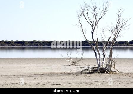 Salt Flat, Stark Tree and River, Kangaroo Island, Australia - Stock Photo