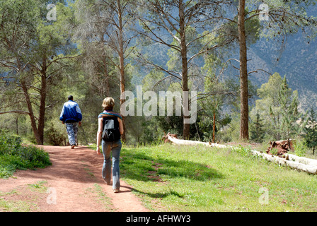 trekking in pine forest near Ouirgane Val d Ouirgane Ouirgane valley High Atlas mountains Morocco North Africa - Stock Photo