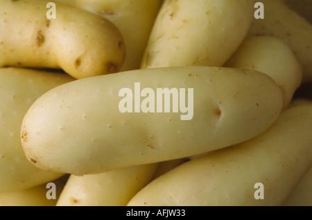 Solanum tuberosum 'Ratte'. AGM Washed early maincrop potatoes - Stock Photo