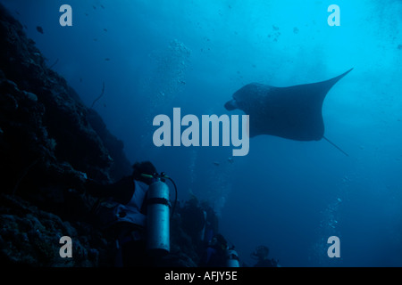 Maldives north male atoll lankan group of scuba divers watching a giant manta ray - Stock Photo