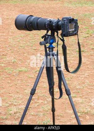 wildlife photographer ´s hand tool telephoto telephoto lens telephotolens tele reflex camera tripod magic ball head - Stock Photo