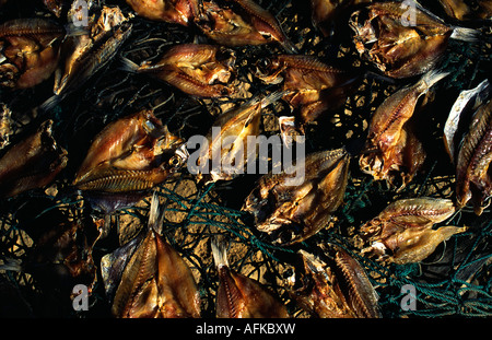 Fish drying on simple raised nets near the Senegal River, St Louis - Stock Photo