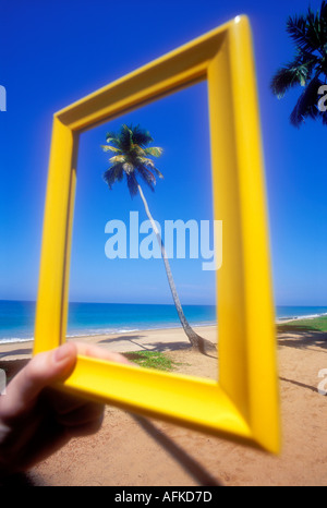 Hand holding yellow frame around palm tree on tropical beach in Sri Lanka Indian Ocean Model Released Image - Stock Photo