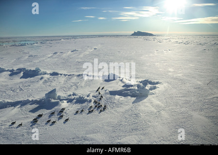 Aerial view of Emperor penguins on their way back to the colony Cape Washington Antarctica - Stock Photo
