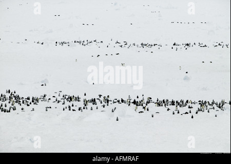 Aerial of an Emperor penguins colony Coulman Island Antarctica - Stock Photo