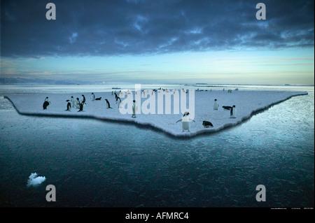 Adelie Penguins on an ice floe Cape Adare Antarctica - Stock Photo