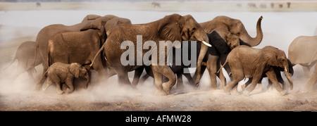 African Elephant family Chobe Botswana - Stock Photo