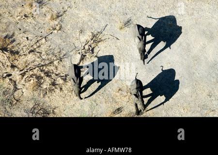 Aerial view of elephants and shadows Amboseli National Park Kenya - Stock Photo